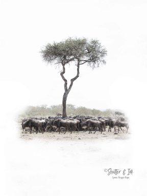 Wildebees 4
